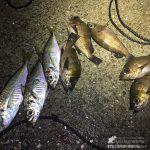 【メバルとアジが】ブロ友さんと一緒に楽しいウキ釣り【釣れました】