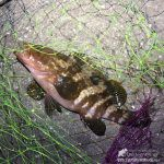 【レアキャラも】ウキ釣りリベンジで五目釣り達成【ゲットしたよ!】